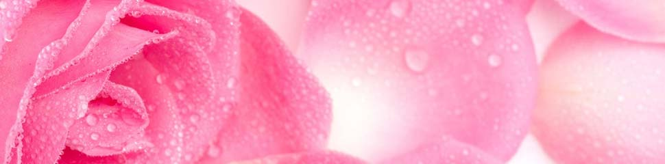 Pink Rose petalPink Rose Petal is enjoyable in smell, taste and vision.It also helps to beatify skin, prevent constipation, cool down body temperature, and moisten throat.